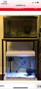 Double rack 15 Gallon/ 20 Gallon Aquarium Tank for sell.