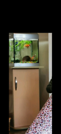 Small fish tank stand and accessories