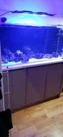 4ft Marine tank with sump and stand