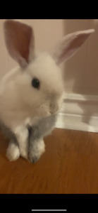 2 month old bunny