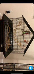 6 month old budgie with cage and accessories