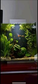 Fluval Edge 46L Aquarium bundle
