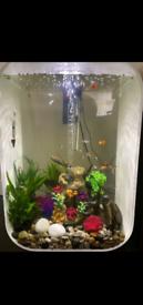 60l borb life fish tank aquarium