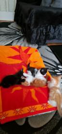 Kitten's
