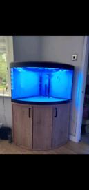 Fluval 190litre corner aquarium
