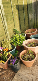 Plant/Flower Pots, all big sizes. OFFERS CONSIDERED!