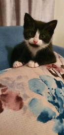 Kittens for new forever home