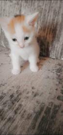 3 Beautiful Kittens. 2 boys and 1 girl