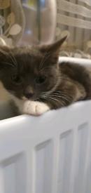 Kitten for sale!!