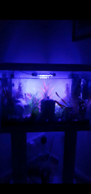 70L Fish tank with accessories and stand