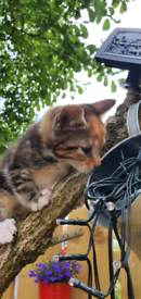 Adorable female kitten