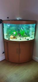 Juwel corner fish tank aquarium