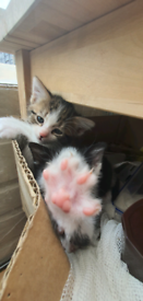 kittens are looking for a new home