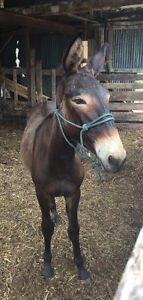 LOOKING FOR FARRIER NEAR LONDON ONTARIO