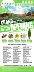 Grand opening, Emerald cedar 25% off, everything else 15% off.