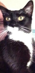 Missing - Nimowei - small female black and white cat