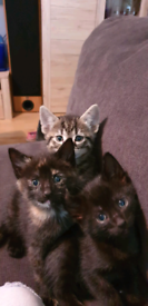 Kittens all reserved