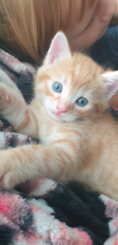 Kittens. Sold