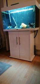 140 litres tank and fish