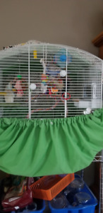 English Budgie with Cage