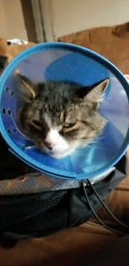 Lost cat (Lenny)
