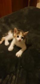 2 gorgeous kittens left