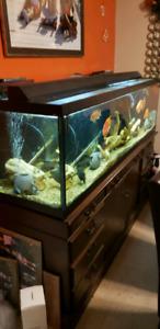 SOLD!!! fish tank 600.00