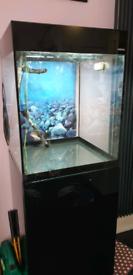 Aquael 135L Cube aquarium.