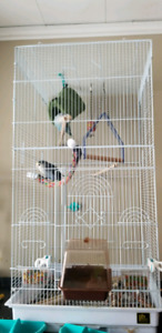Two lovebirds with cage *reduced*
