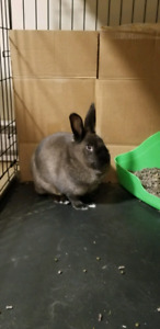 Free Bunny to a good home!