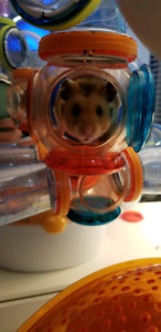 Hamster and all accessories