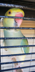 Pastel clear tail