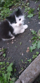 another black kitten