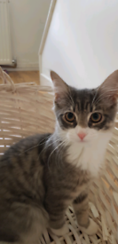Kitten looking for good home