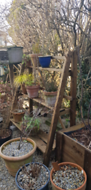 Garden plant pot display unit