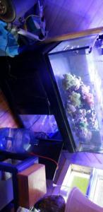 Aquarium 80 gallon