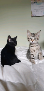 3 Friendly kittens looking for homes!
