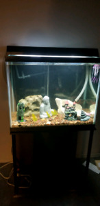 60 gallon fish tank with everything you need