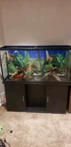 60G aquarium