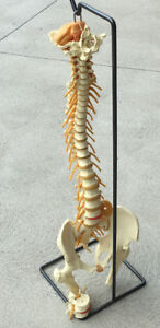 Chiropractor's AID!