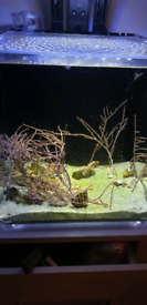 Gorgonian coral frags