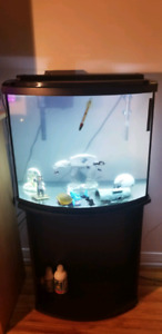 Full fish tank with accessories plus freshwater fish