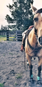 9 year old quarter horse