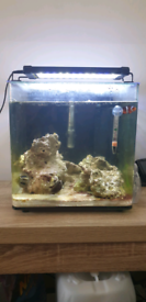 22litre marine fish tank for sale