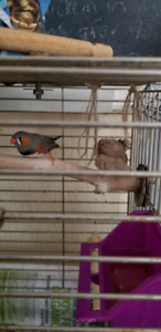 Free finches