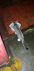 Kitten needs a home