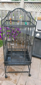 Parrot Steel Cage