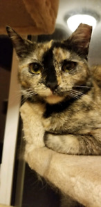 Elvira is available for adoption