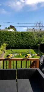2 hélicoptères téléguidés, 2 RC helicopters.