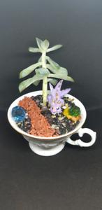 Custom teacup garden